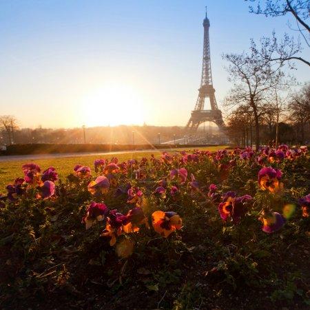 Flowers near Eiffel tower