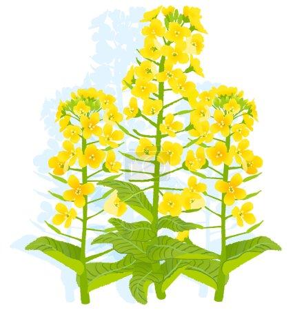 Illustration pour Illustration de fleurs rapasées sur fond blanc. PSE10 . - image libre de droit