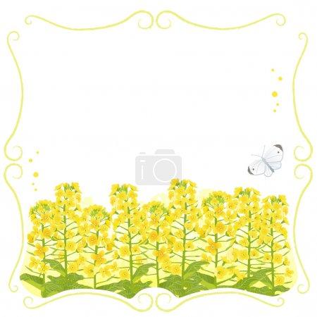 Illustration pour Cadre de tige avec des fleurs de canola et un papillon blanc. Le fichier contient le masque Clipping et Transparence . - image libre de droit