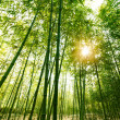 Bamboo forest,...