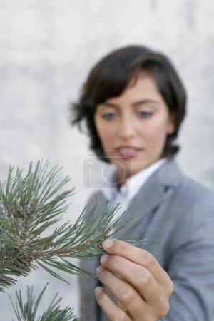 Hispanic businesswoman touching pine tree
