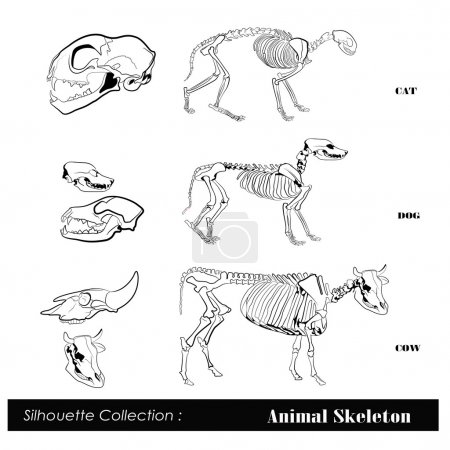 Vector illustration .Animal skeleton