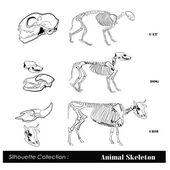 Vector illustration Animal skeleton