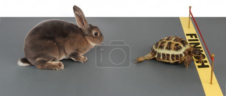 Photo for Turtle winning the race against a rabbit - Royalty Free Image