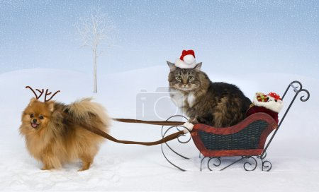 A Pomeranian wearing antlers pulls a sleigh with g...