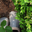 Garden still life - shoes of a man, soil and plant...