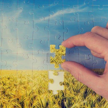 Photo pour Homme tenant la dernière pièce d'un puzzle d'une vue de paysage d'un champ de blé d'or dans sa main conceptuel de résolution de problèmes et de conservation, d'image a un effet délavé instagram. - image libre de droit