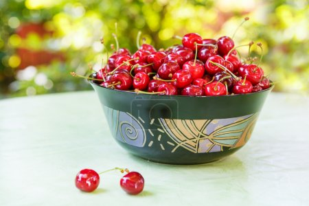 Fresh ripe organic red cherries in summer garden