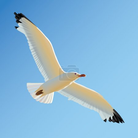 White seagull soaring in blue sky