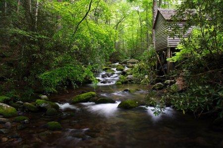 Scenic Smokies Creek