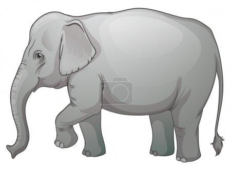 Illustration on an Asian elephant (Elephas maximus...