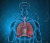Lidský dýchací systém