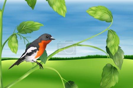 Illustration showing the bird...