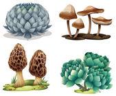 Cactus and mushrooms