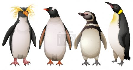 Illustration of the Penguins on a white background...