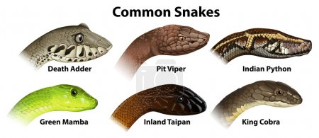 Common snakes