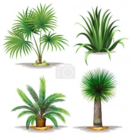Illustration for Illustration of the palm plants on a white background - Royalty Free Image