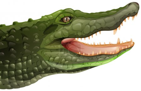 Illustration of a crocodile on a white background...
