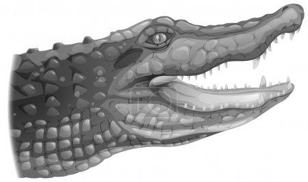 Illustration of a grey crocodile on a white backgr...