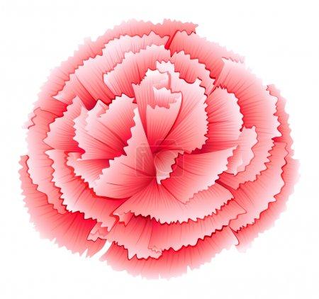 A carnation pink flower