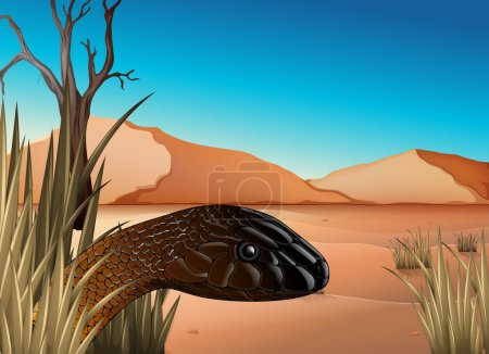 A reptile at the desert
