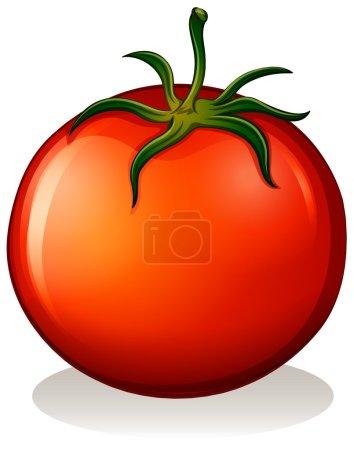 A big ripe tomato