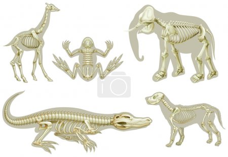 Skeletons of animals
