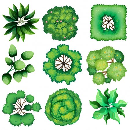 Illustration of the topview of leaves on a white b...