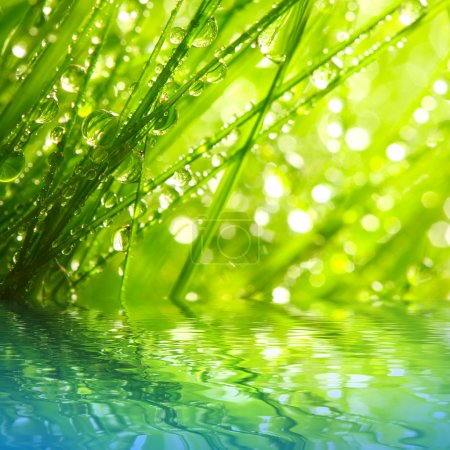 Photo for Fresh morning dew on a spring grass in early morning. Sunny day concept. Natural background. - Royalty Free Image