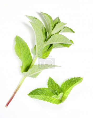 Mentha piperita - Peppermint oil has been used historically for numerous health conditions, including common cold symptoms, cramps, headache, indigestion, joint pain, and nausea.
