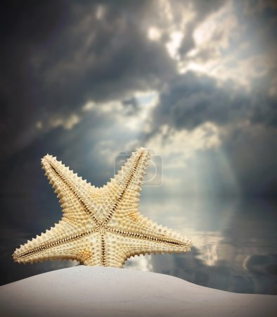 The Common Caribbean starfish on the beach. Natural background