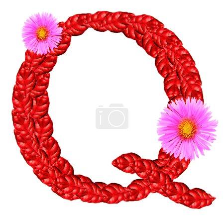 Photo pour Lettre q de feuilles rouges et fleurs d'aster isolés sur blanc. grand alphabet pour la Saint-Valentin salutations ou cosmétiques brochures et publicités - image libre de droit
