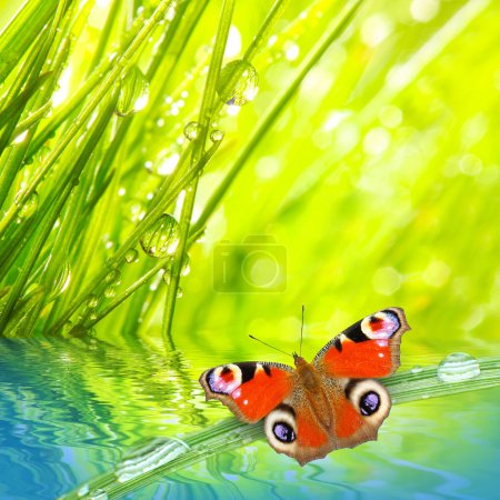 Photo for Fresh morning dew on a spring grass and butterfly, natural background - close up with shallow DOF. - Royalty Free Image