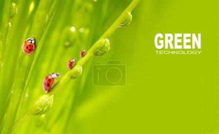 Fresh grass and little ladybugs