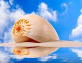 A conch shell on an tropical beach.