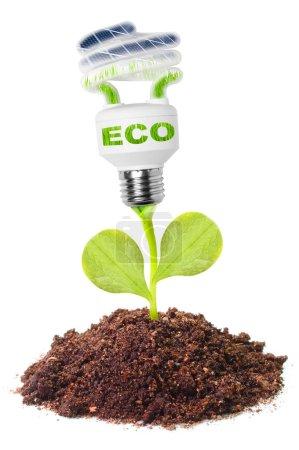 Photo pour Ampoule bosquet dans un sol. Concept d'énergie alternative . - image libre de droit