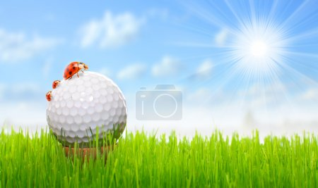 Golf ball and ladybugs - funny picture from golf c...