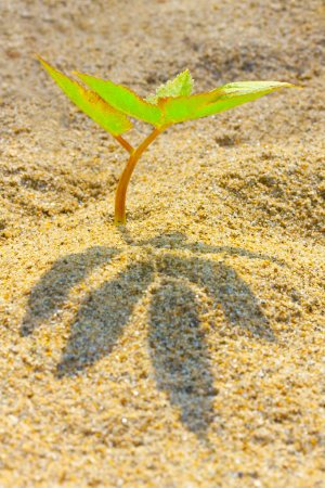 Young seedling growing in a desert sand