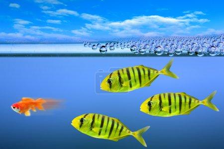 Predatory fishes