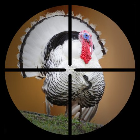 The Turkey in the Hunter's scope.