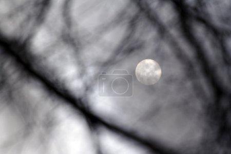 Photo pour Fond clair de lune. Photo réalisée en noir et blanc - image libre de droit