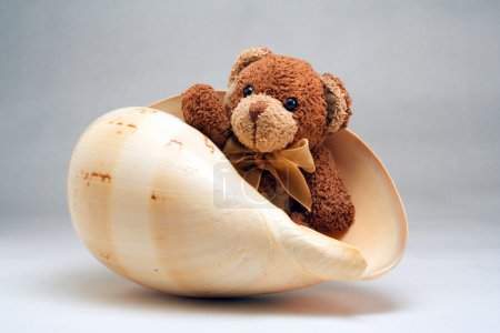 Bear in shell