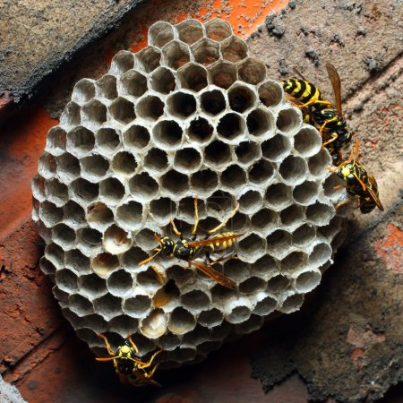Wasps in the nest closeup...