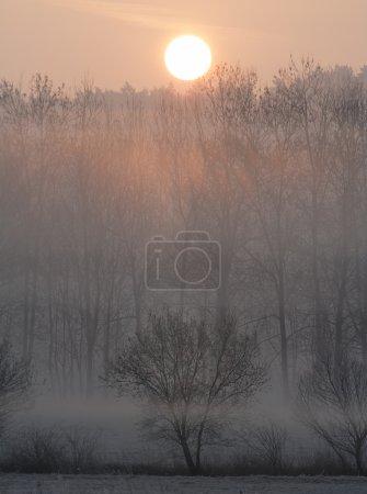 Photo pour Lever de soleil dans une forêt par une matinée brumeuse - image libre de droit