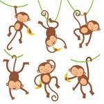 Funny monkeys set...
