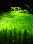 Mossy forest floor with beautiuful sunlight falling in the middle