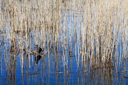 Prespes lake at north Greece...