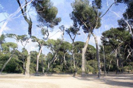 Overlayed trees