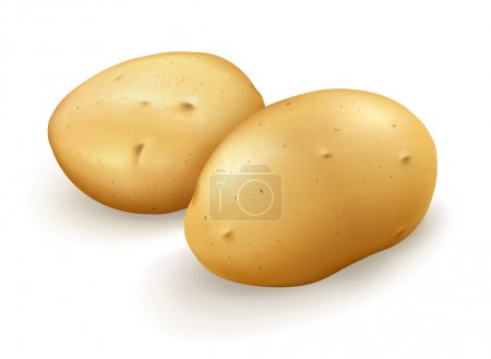 Potatoes, vector