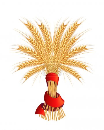 Illustration for Sheaf of wheat, vector - Royalty Free Image